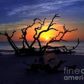 Sunrise Jekyll Island Driftwood Beach by Charlene Cox