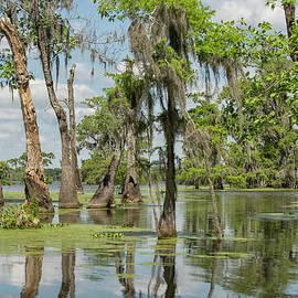 Swamp landscape by Patricia Hofmeester