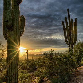 Saija Lehtonen - The Beauty of the Sonoran Desert