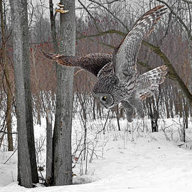 The Hunting Great Gray Owl by Asbed Iskedjian