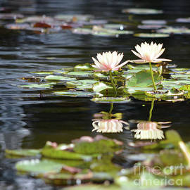 Ruth Housley - Water Lilies