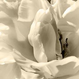 Lali Kacharava - White tulips