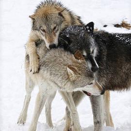 Steve McKinzie - Wolf Pack