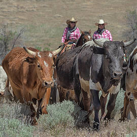 2018 Reno Cattle Drive 10 by Rick Mosher