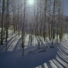 210609 Aspens In Winter With Sunburst by Ed Cooper Photography