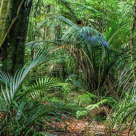 Les Cunliffe - Jungle
