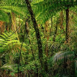 Jungle - Les Cunliffe