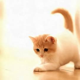 Vadim Pavlov - Cat