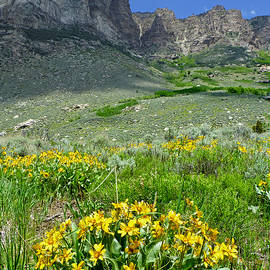 2d11127-dc South Wall And Wildflowers by Ed Cooper Photography