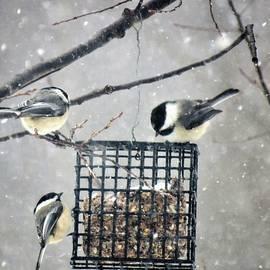 Three Chickadees in Winter by Carol McGrath