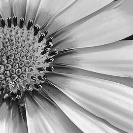 Bruce Bley - Daisy in Black and White