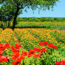 Hill Country In Bloom by Thomas R Fletcher