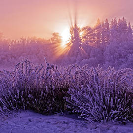 Darcy Michaelchuk - hoar frost Sunrise