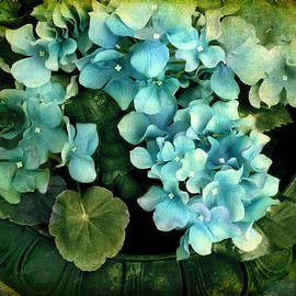 Hydrangea by Jessica Jenney