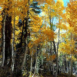 Lynn Bawden - Mountain Road