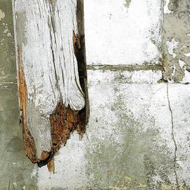 Rotting wood - Tom Gowanlock
