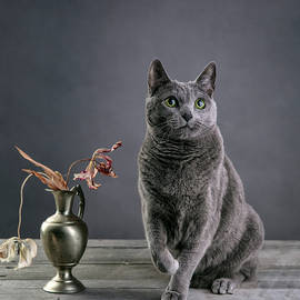 Nailia Schwarz - Russian Blue Cat