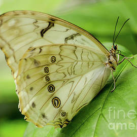 Butterfly Macro by Nick Boren