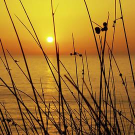Sunset by Carlos Caetano