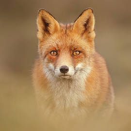 That Foxy Face by Roeselien Raimond