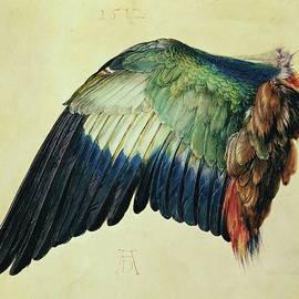 Wing of a Blue Roller - Albrecht Durer