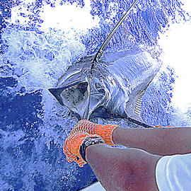 350 lb Marlin Coming Aboard