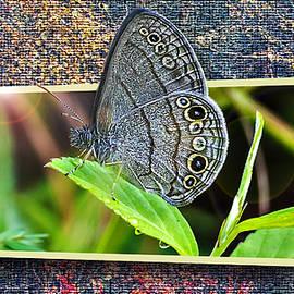 Michael Whitaker - 3D Blue Butterfly