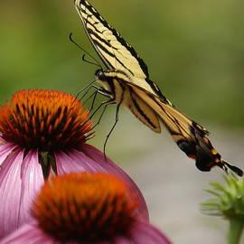 Butterflies by Robert Worth