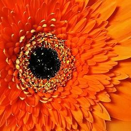 Bruce Bley - Orange Delight