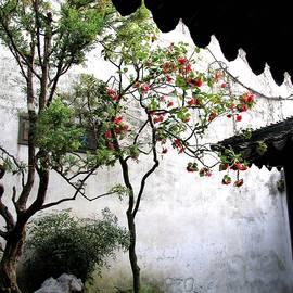 Suzhou Gardens by Marti Green