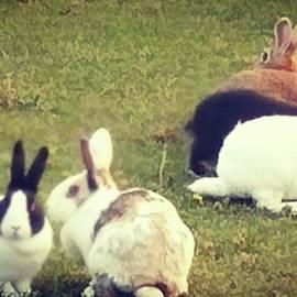 Happy Rabbit Jp - #青森県 #八戸市 #種差海岸