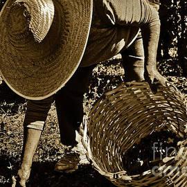 Coffee Culture In Sao Paulo - Brazil by Carlos Alkmin