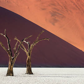 Dead Acacia Trees and Red Dunes of Deadvlei in Namib-Naukluft Pa by Andrey Omelyanchuk