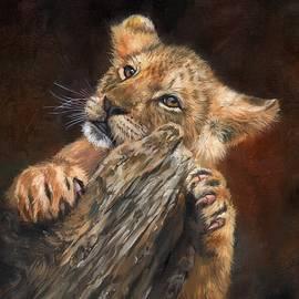 David Stribbling - Lion Cub