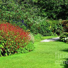 Summer garden - Tom Gowanlock