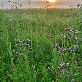 Ray Mathis - Glacial Park Prairie at Sunrise
