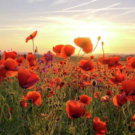 Steffen Gierok - Poppys Sunset