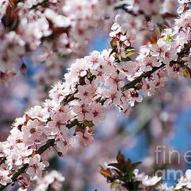 Elvira Ladocki - tree blossoms