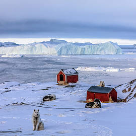 Joana Kruse - Huskies in Ilulissat, Greenland