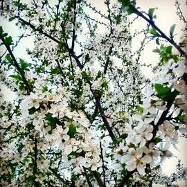 Dmitry Vinogradov - #Москва #цветы