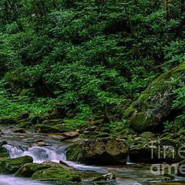 Thomas R Fletcher - Kens Creek Cranberry Wilderness