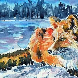 Red fox - Kovacs Anna Brigitta