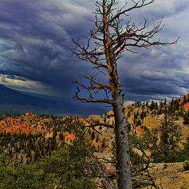 Bryce Canyon National Park by Mark Smith