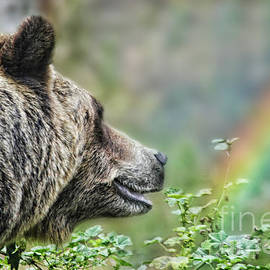 Jim Fitzpatrick - A Bear Watching the Sun Return