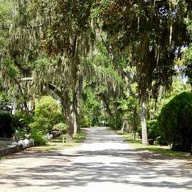 Terry Cobb - A Bonaventure Cemetery Roadway