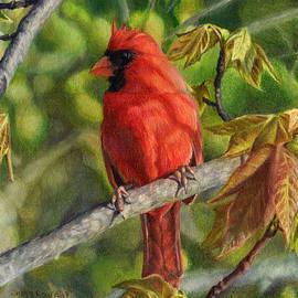 Shana Rowe Jackson - A Cardinal Named Carl