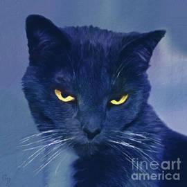 A Cat's Dark Night by Gabriele Pomykaj