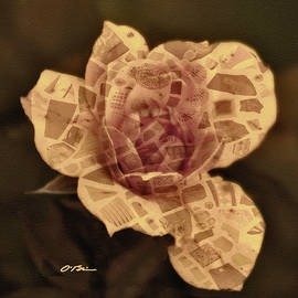 A Complicated Rose by Claudia O'Brien