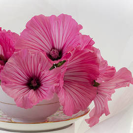 A Cup Of Pink Lavatera Flowers by Sandra Foster