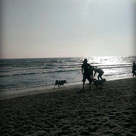 A Day At The Dog Beach  by Missy  Brage